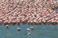 Pink Lake Wonder ~3~
