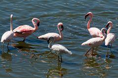 Pink Lake Wonder ~4~