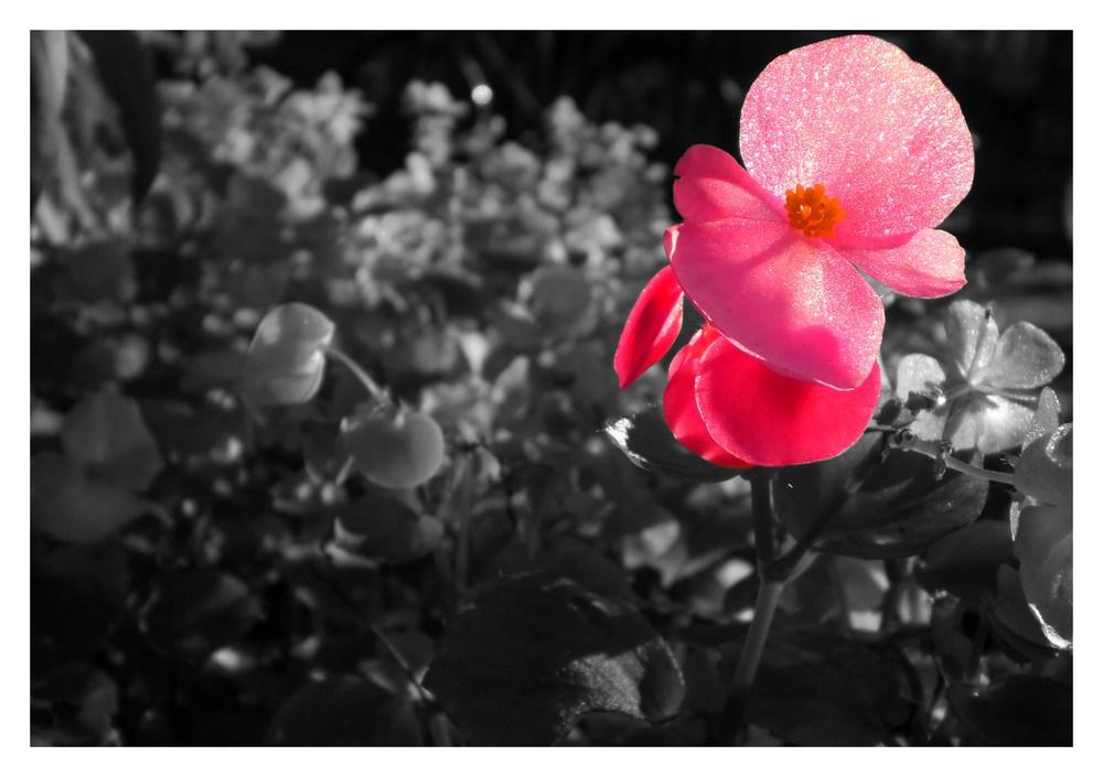 Pink Reload