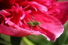 Pink und grün