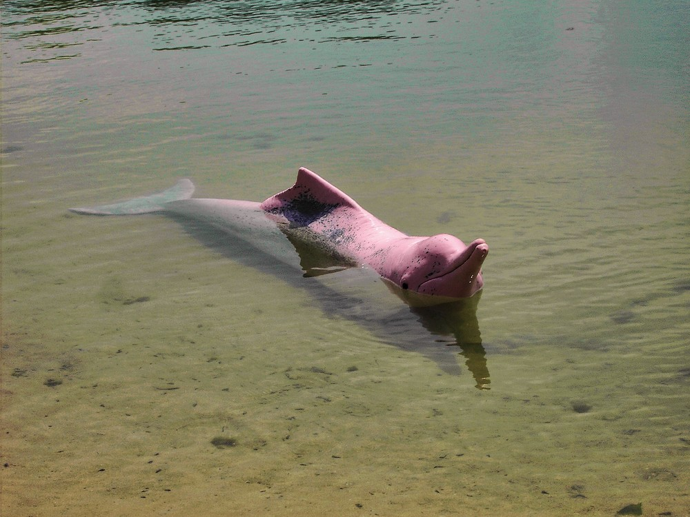 Pinkdelphin auf Sentosa Island