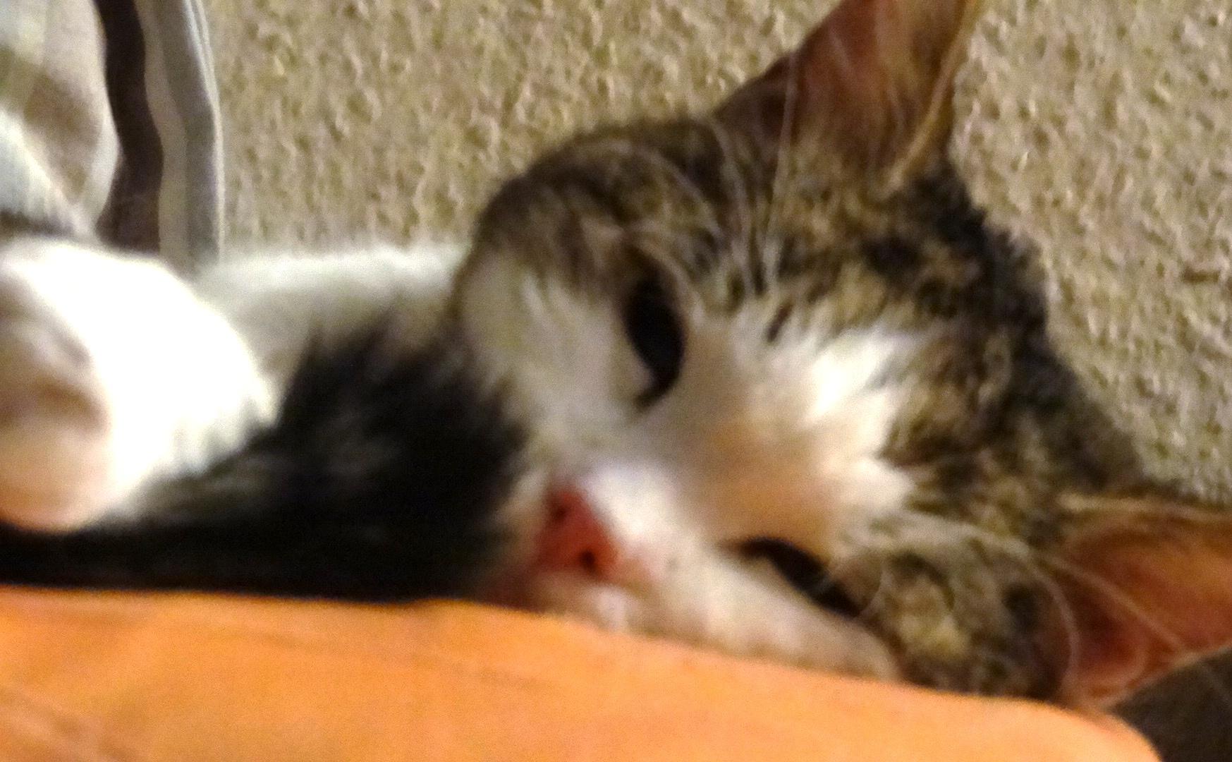 Pinky ist müde!!