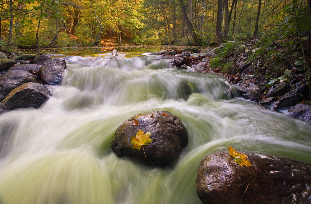 Pinnau im Herbst