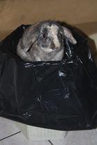 Pinpin et sa poubelle