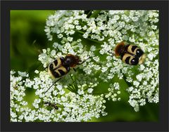 Pinselchen und Ameise