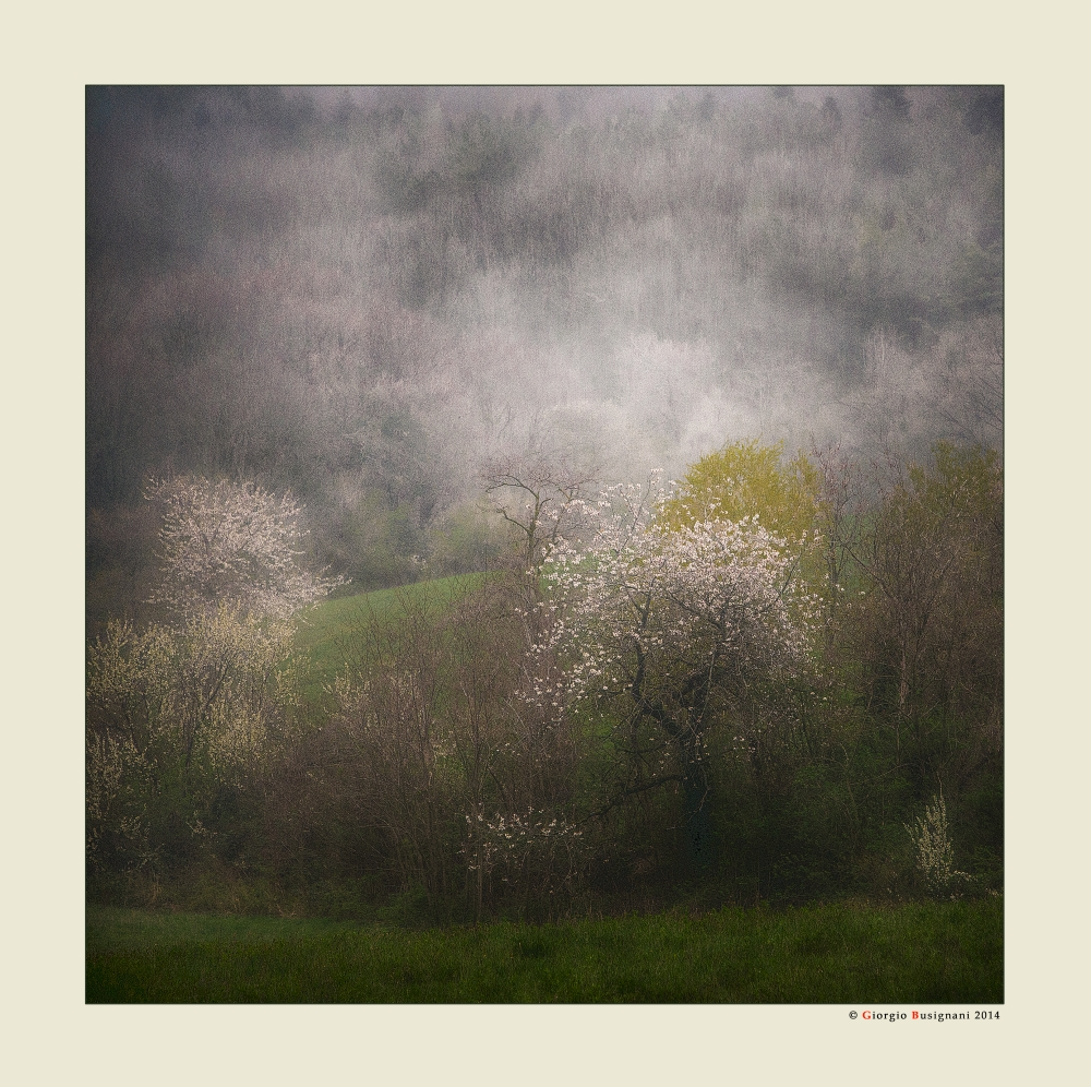 Pioggia di primavera Foto % Immagini  paesaggi, boschi e foreste ...