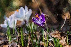 Pioniere des Frühlings (17)