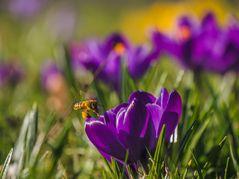 Pioniere des Frühlings (18)