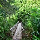 Pipiwai Trail'17