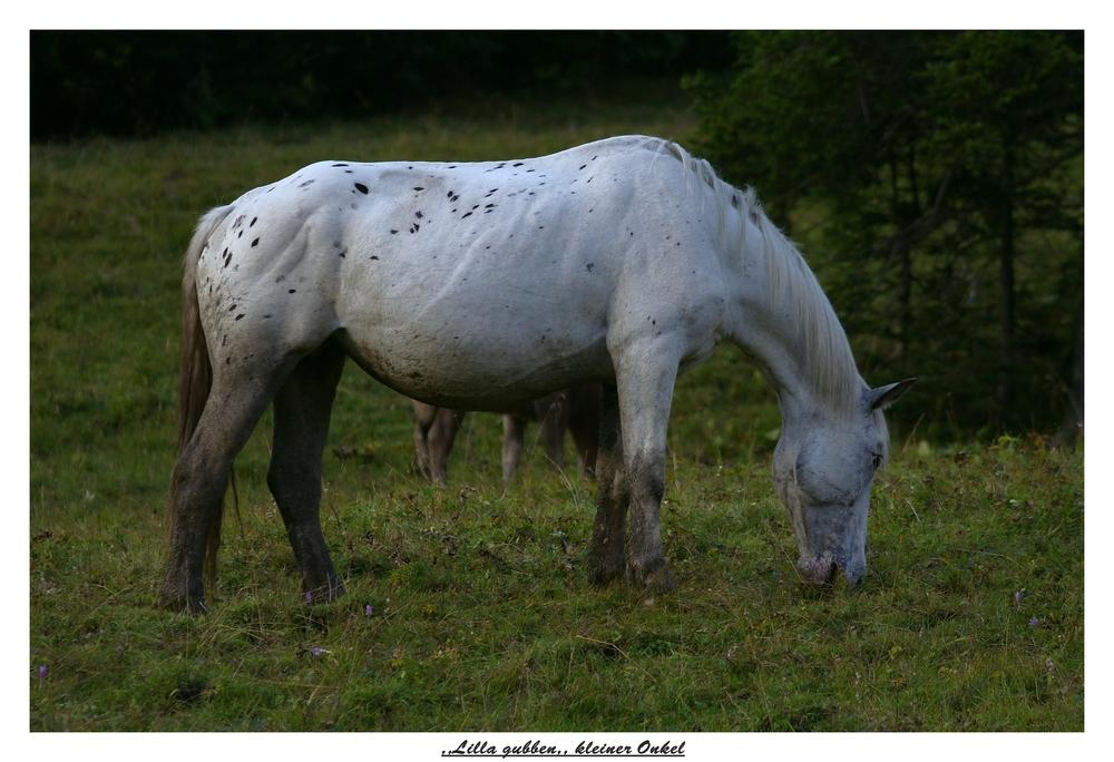 Pippi Langstrumpfs Pferd