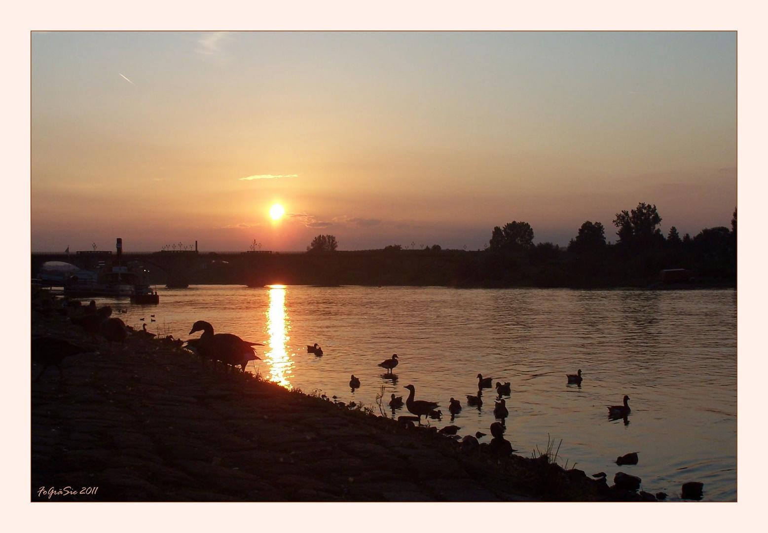 Pirna an der Elbe ...
