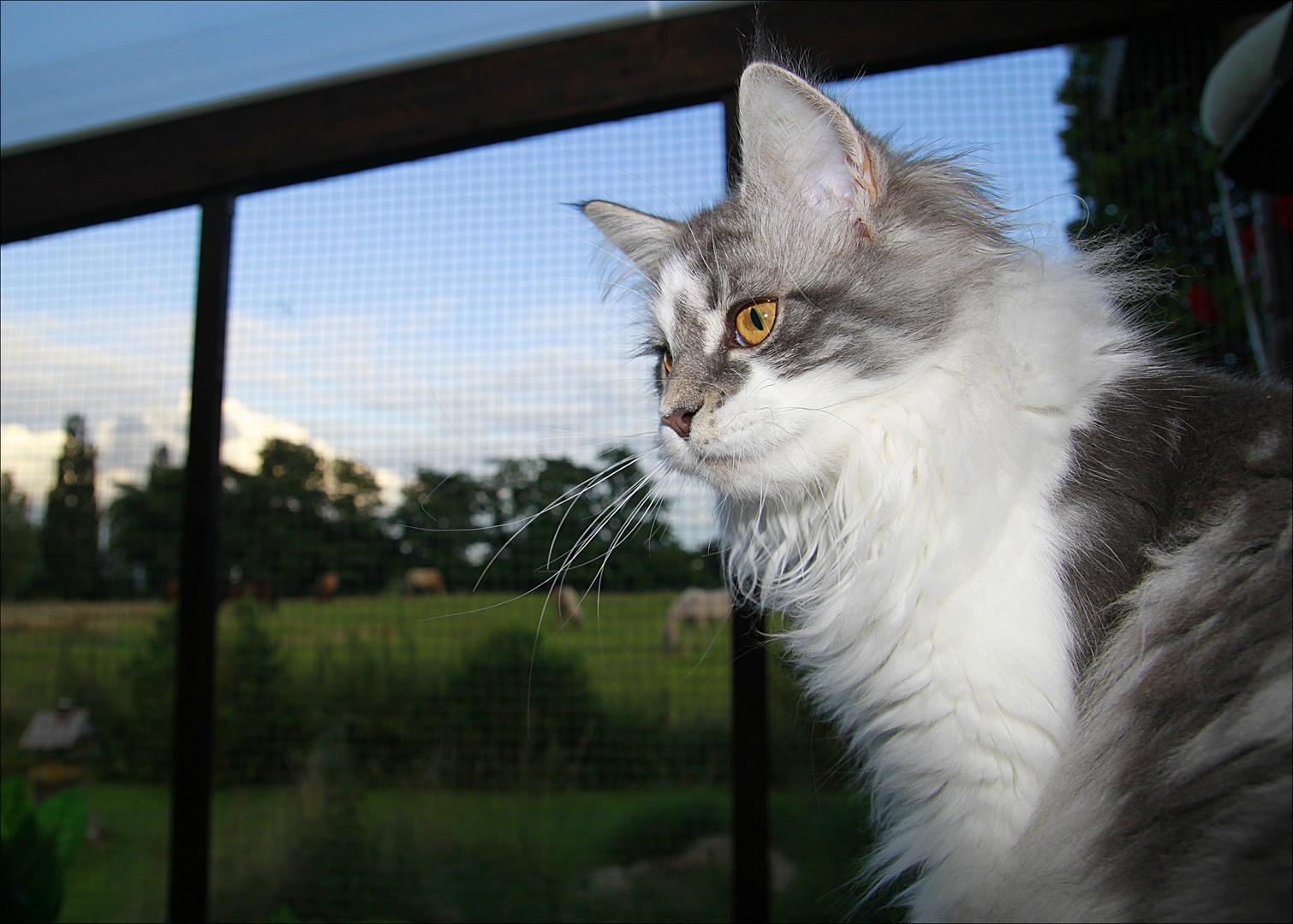 Pitty und die Riesenkatzen :-)))