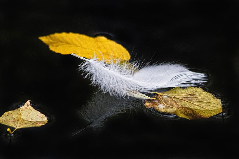 Piuma con foglie
