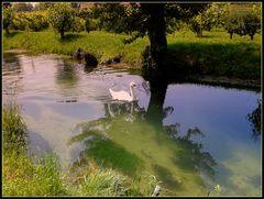 Placido e ..silenzioso..lungo il fossato...
