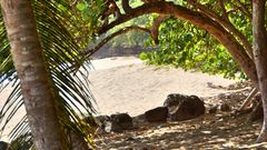 Plage Cluny Guadeloupe