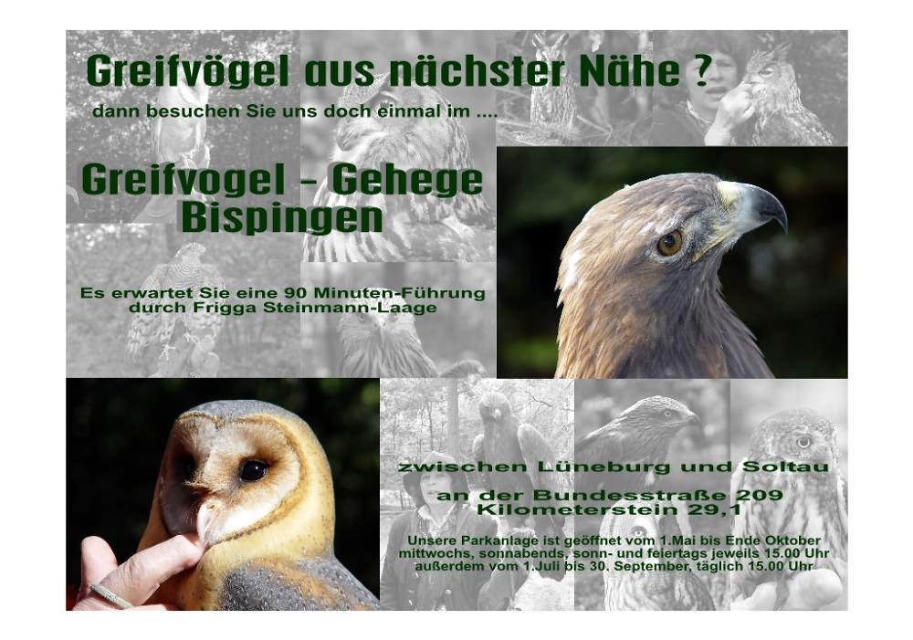 Plakatentwurf Greifvogelgehege Bispingen