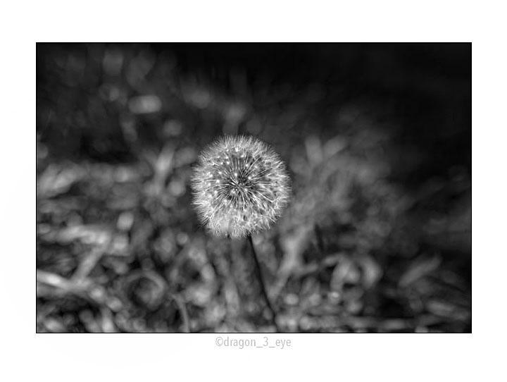 Planet Dandelion