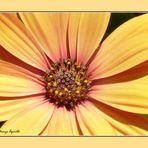 Planeta flor