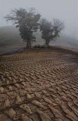 Planierraupenspuren mit kleiner Baumgruppe im Nebel!