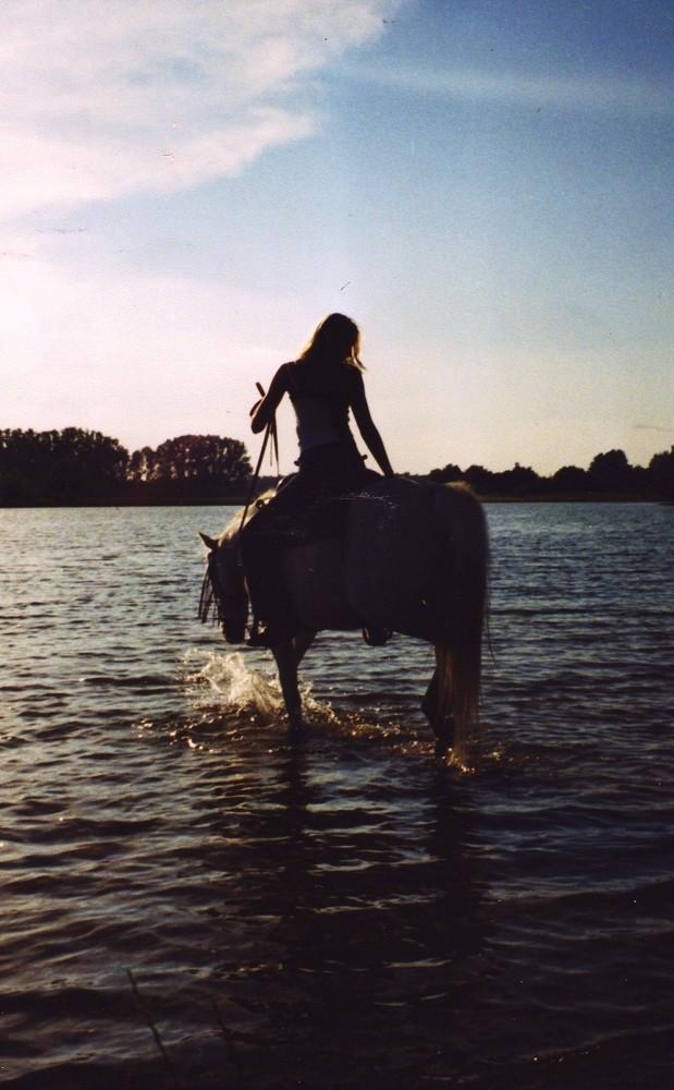 Planschendes Pferd