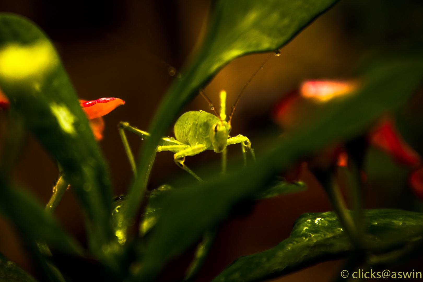 Plant Locus