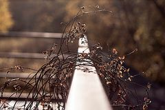 plant on railing