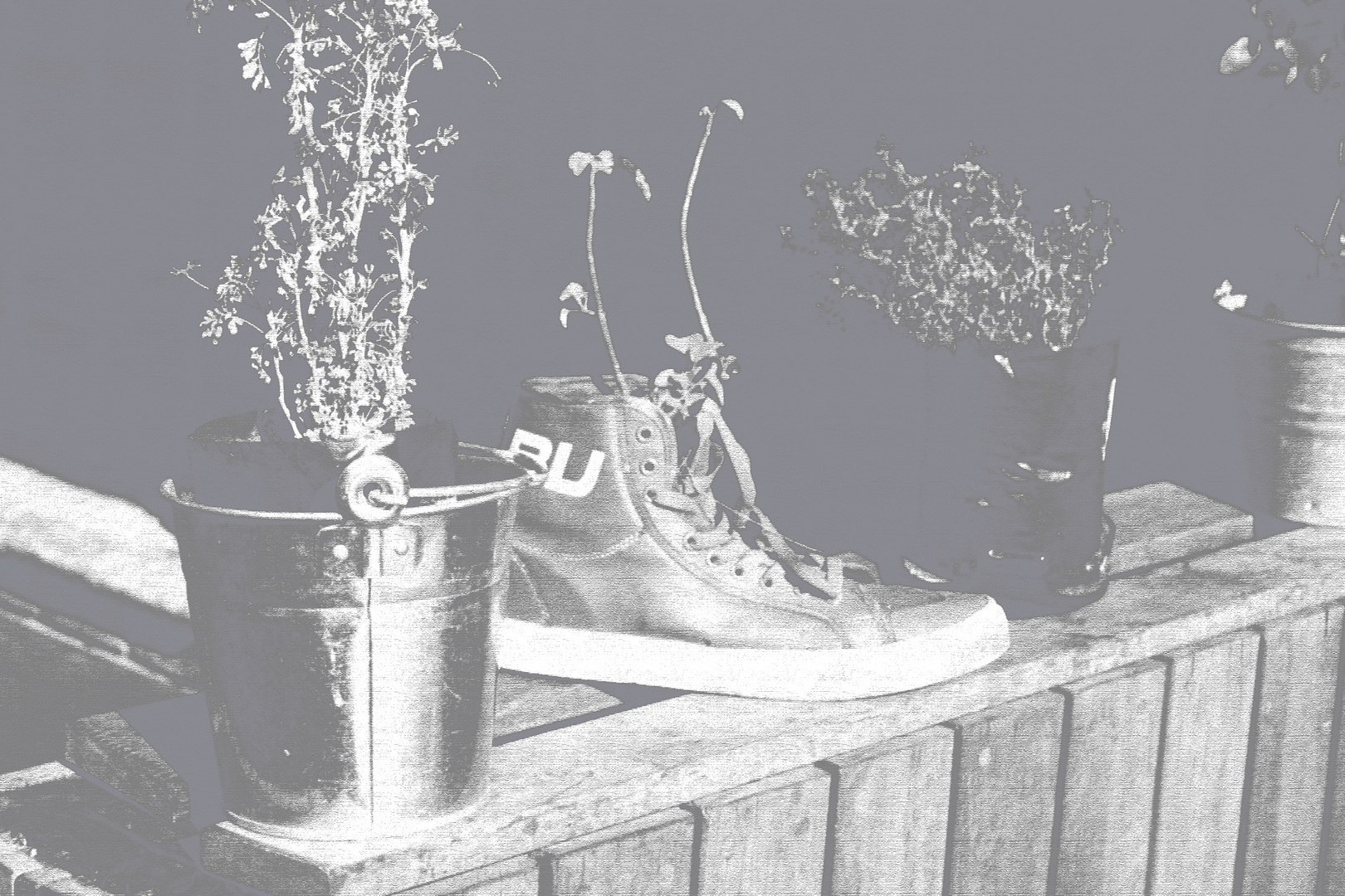 Plant Shoe