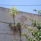 Planta en el muro