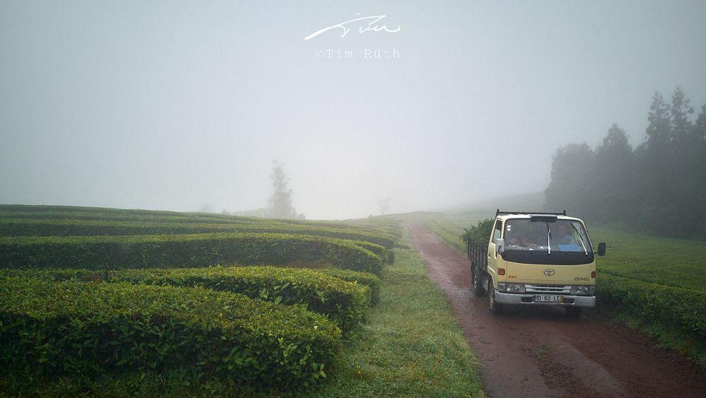 Plantación de té (2)
