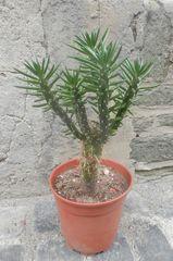 Plante adoptée (2)
