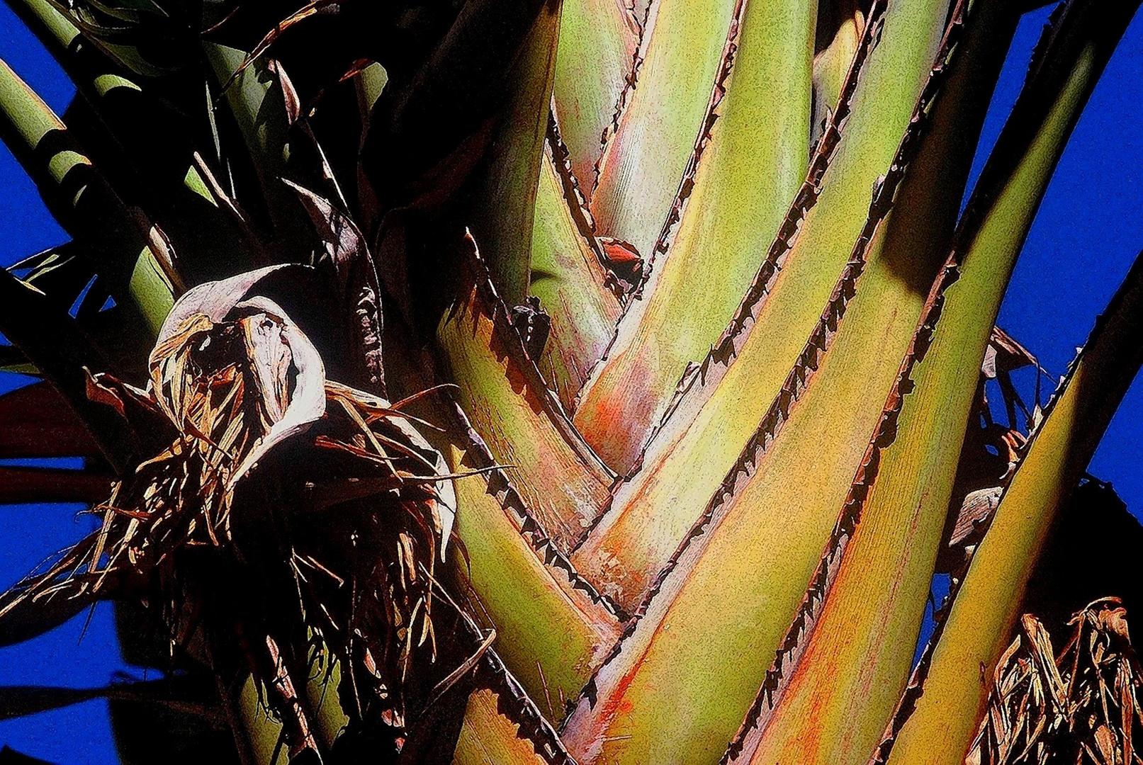 Plante grasse dans un jardin marocain