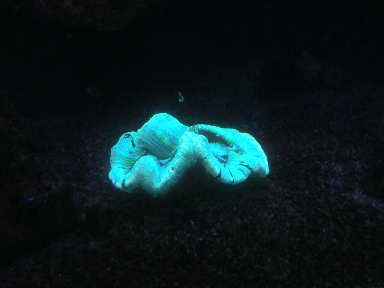 Plante Marine