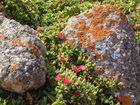 Plants, no Fungi & Lichens