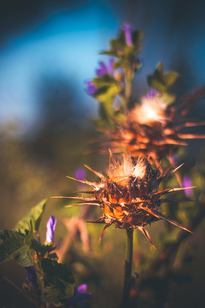 Plants of joy 3