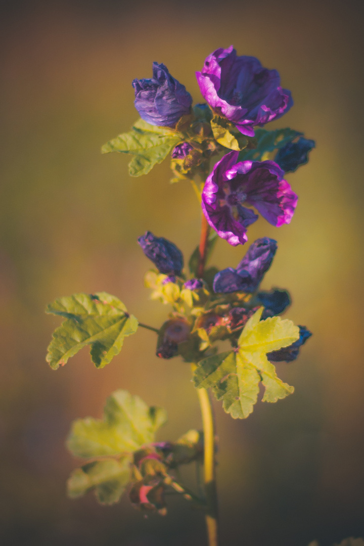 Plants of joy
