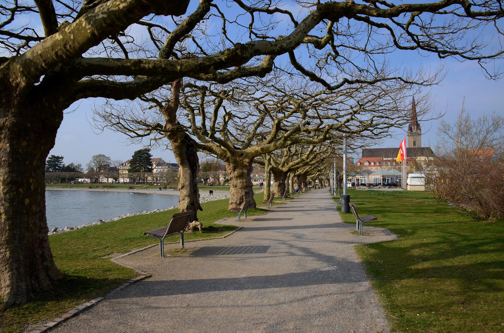 Platanien Entlang Der Strandpromenade Foto Bild Bodensee Bilder