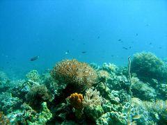 Plateau Calangaman Island (1)