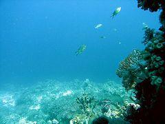 Plateau Calangaman Island (2)