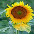 plateau de pollens....