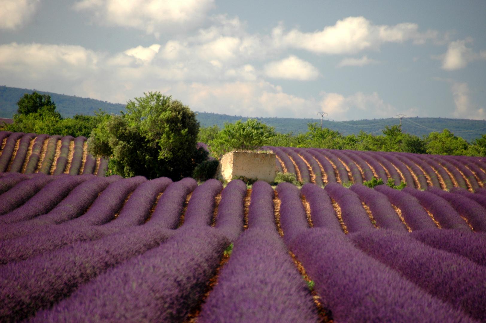 Plateau Valensole Provence