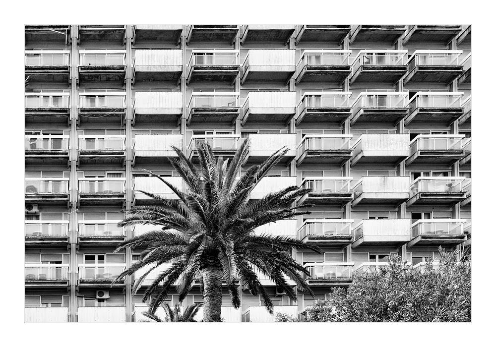 Plattenbau mit Palme