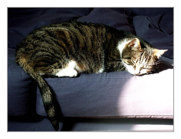 Platz an der Sonne, oder: im nächsten Leben werd ich Katze