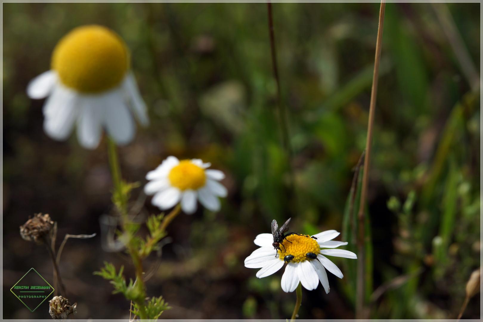 Platz ist auf der kleinsten Blüte