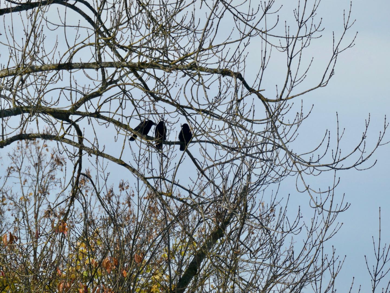 Plausch im Baum