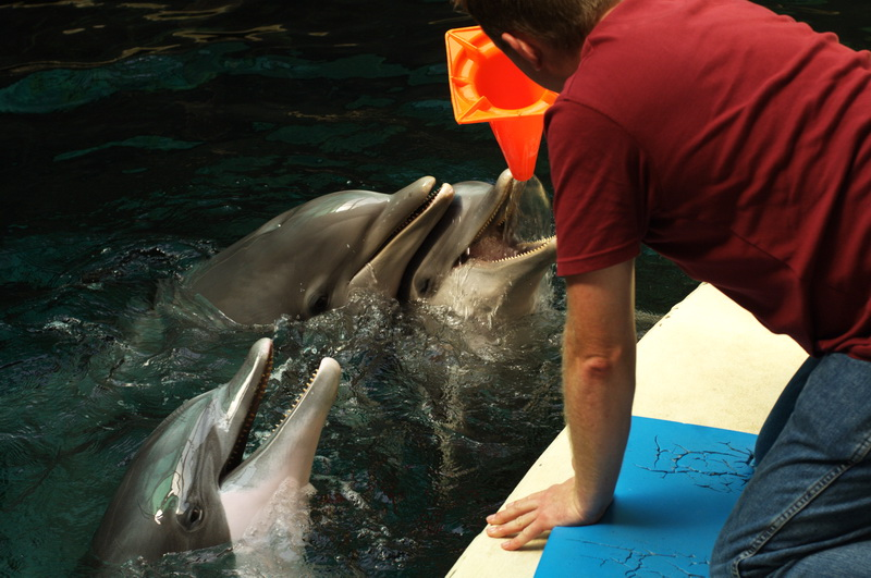 Play with the dophins