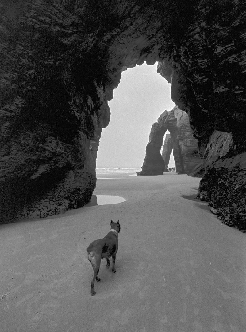 playa de las catedrales con perro