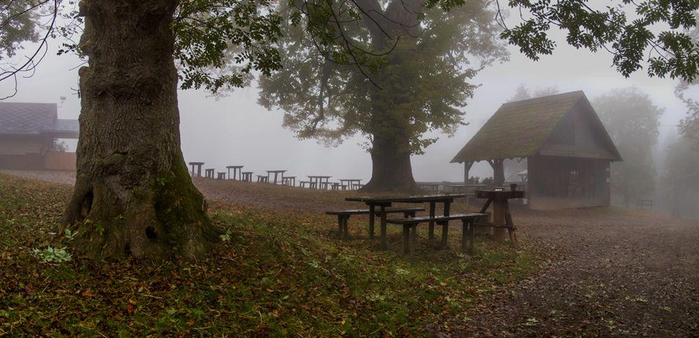 Pleschwirt im Nebel