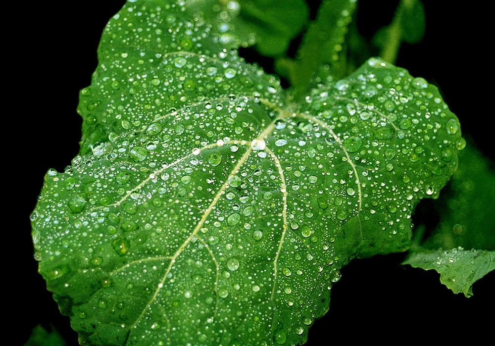 Pleut en Verd