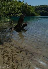 Plitvicer Seen - Glasklar