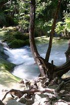 Plitwitze - Baum